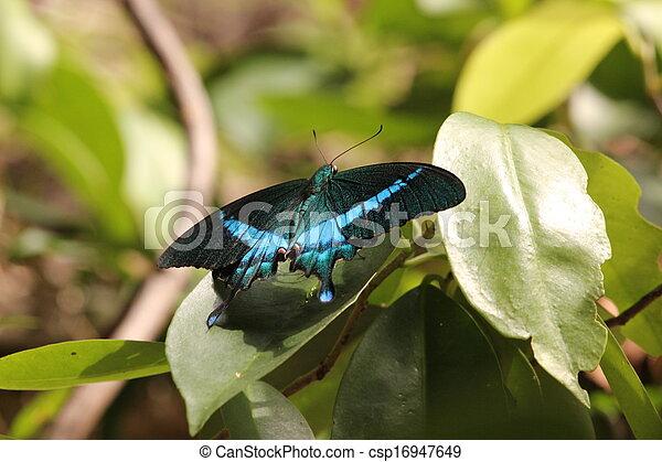 borboleta - csp16947649