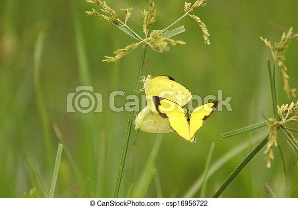 borboleta - csp16956722