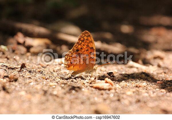 borboleta - csp16947602