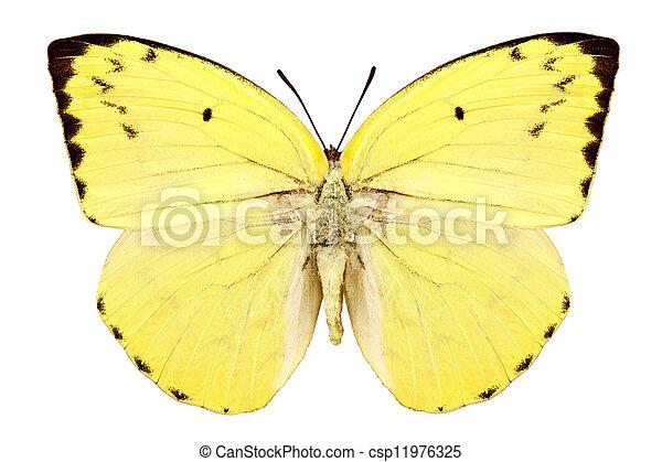 "borboleta, emigrant"", catopsilia, ""lemon, espécie, pomona - csp11976325"