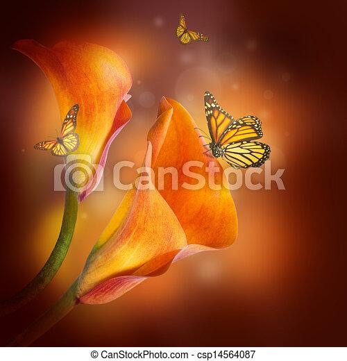 borboleta, escuro, lírios, fundo, multi-colorido - csp14564087