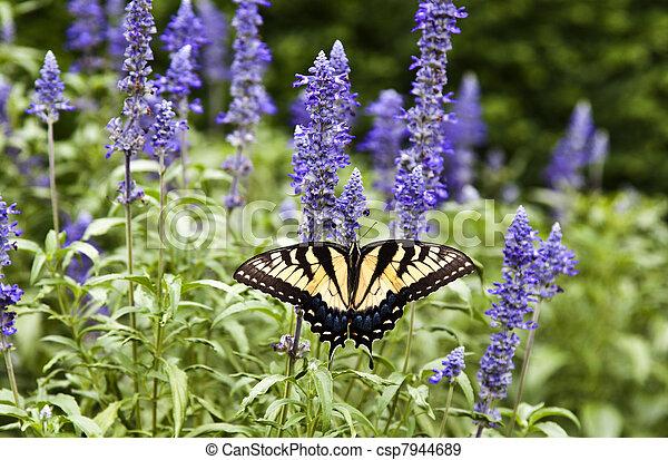 borboleta, natureza, verão, verde - csp7944689