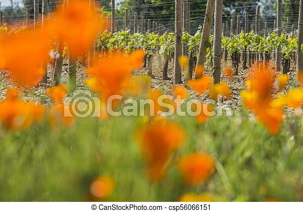 Bordeaux wine region in france flowers in the vineyard countrysi - csp56066151