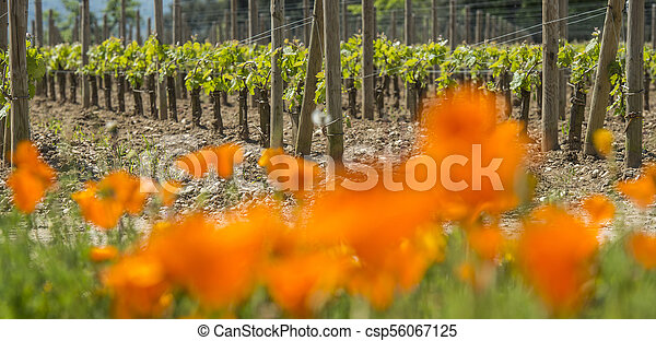 Bordeaux wine region in france flowers in the vineyard countrysi - csp56067125