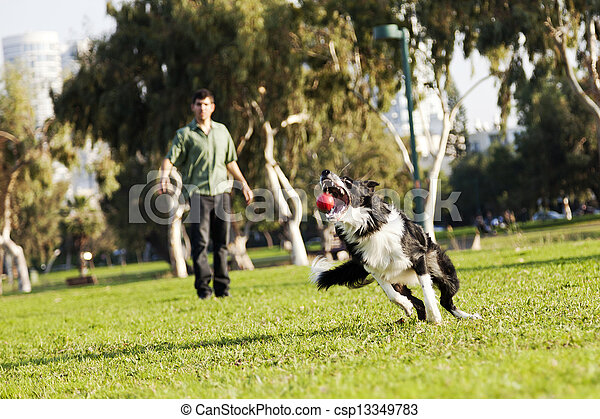 Border Collie Catching Dog Ball Toy at Park - csp13349783