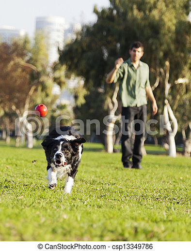 Border Collie Catching Dog Ball Toy at Park - csp13349786