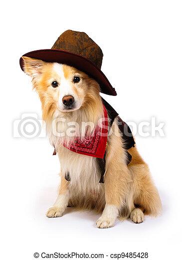 Border Collie Cowboy - csp9485428