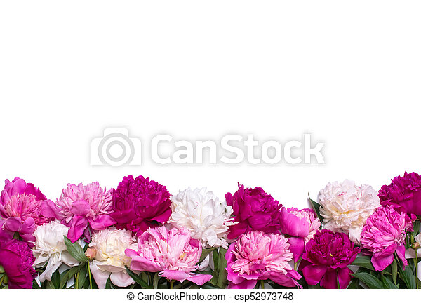 Border of peonies isolated on a white background floral design border of peonies isolated on a white background floral design csp52973748 mightylinksfo