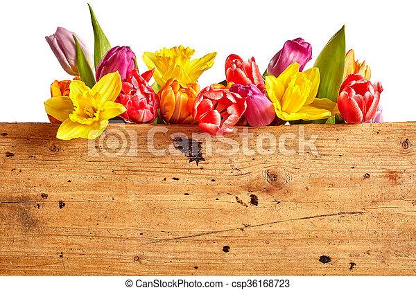 Border of vivid brightly colored spring flowers with stock photo border of vivid brightly colored spring flowers csp36168723 mightylinksfo