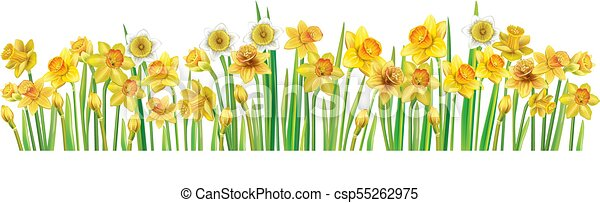 Border with multicolor vector daffodilses - csp55262975