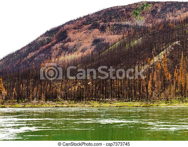 Bosque Boreal en el río Yuokon destruido por el fuego - csp7373745