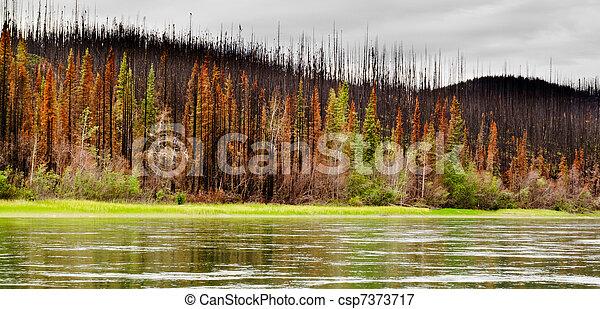 Bosque Boreal en el río Yuokon destruido por el fuego - csp7373717