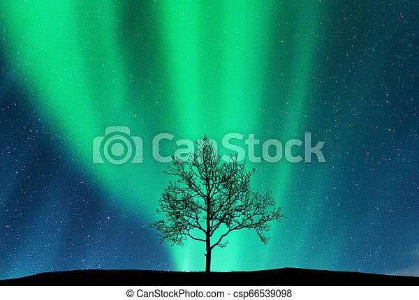 borealis, aurora, silhouette, collina, albero - csp66539098