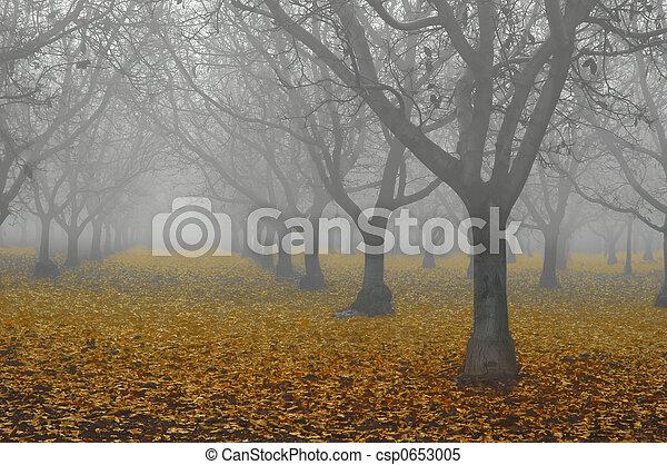 boschetto, nebbia, noce - csp0653005