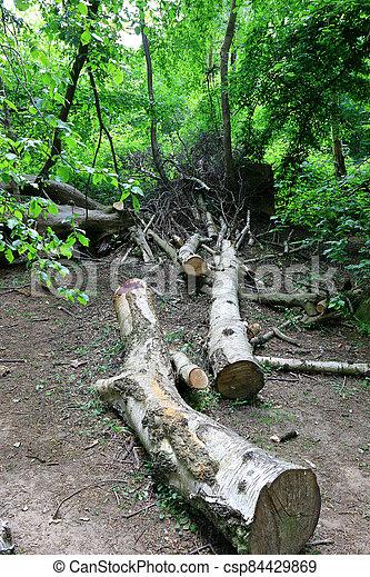 bosque, árboles caídos, paisaje - csp84429869