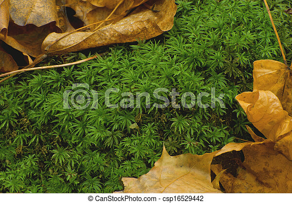 Una alfombra forestal - csp16529442