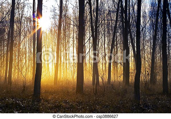 bosque brumoso - csp3886627