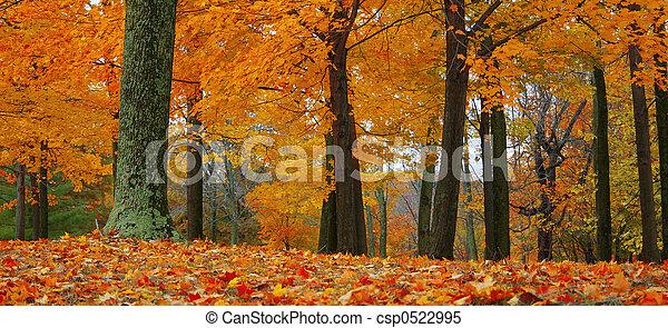 bosque de otoño - csp0522995