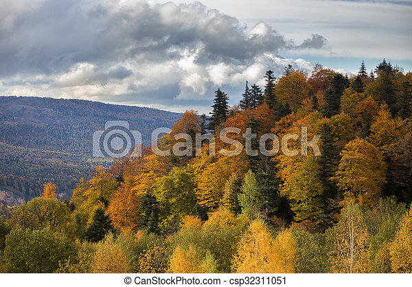 Bosque de otoño - csp32311051