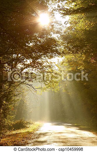 bosque de otoño, camino, mañana - csp10459998