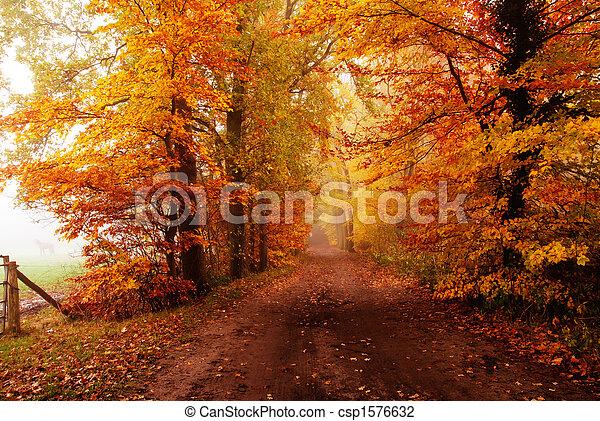 El otoño en el bosque - csp1576632