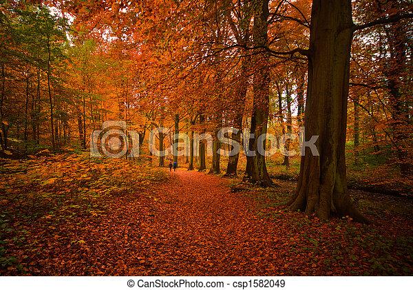 El otoño en el bosque - csp1582049