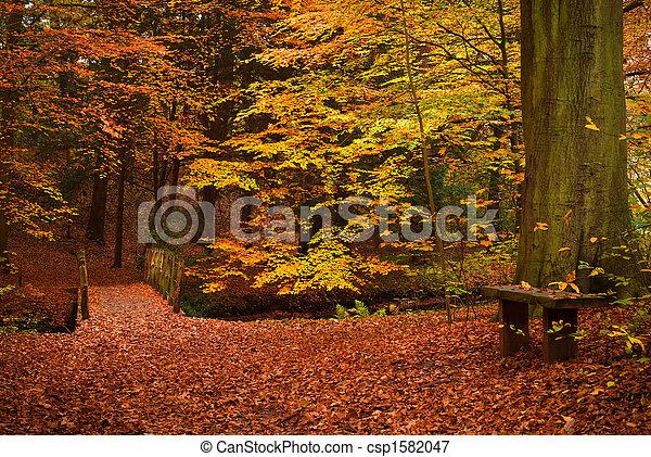 El otoño en el bosque - csp1582047