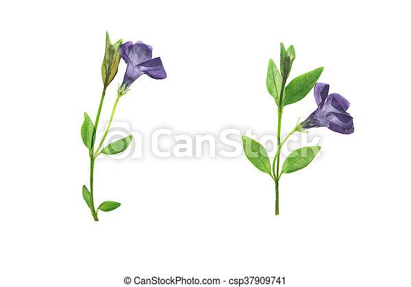 Pulsadas y secas flores violetas forestales - csp37909741