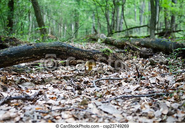 Piso del bosque con hongos - csp23749269