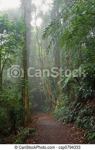 Bosque lluvioso - csp0794333
