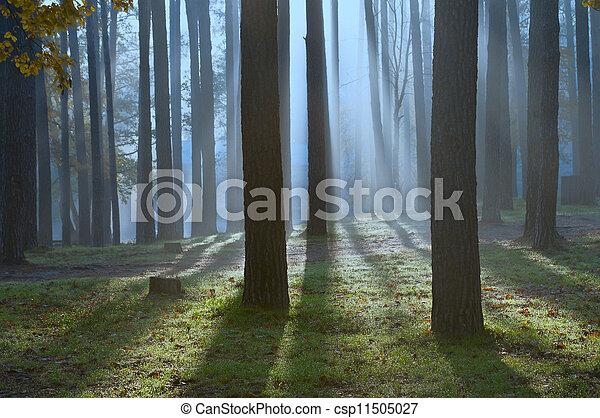 Bosque nocturno - csp11505027