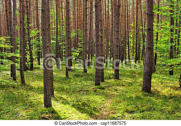 En el bosque - csp11687575