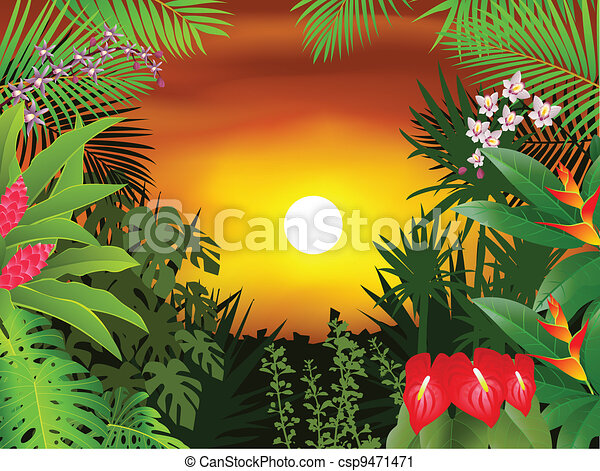 Trasfondo tropical del bosque - csp9471471