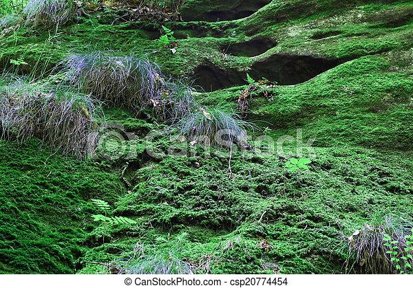 Musgo verde en el bosque - csp20774454