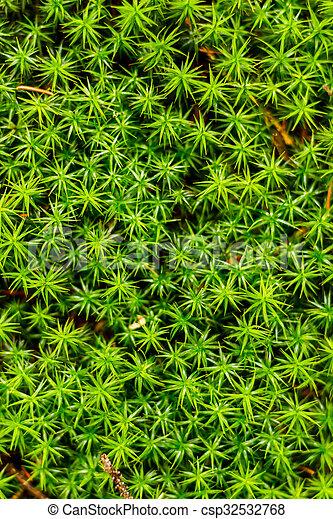 Musgo verde en el bosque - csp32532768