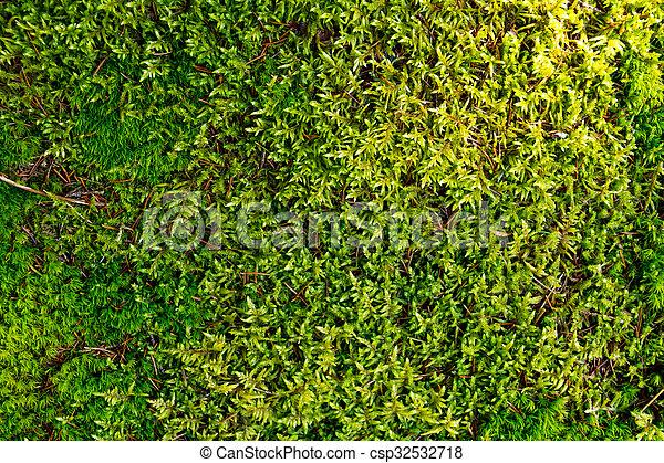 Musgo verde en el bosque - csp32532718
