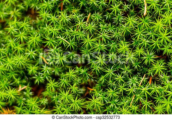 Musgo verde en el bosque - csp32532773