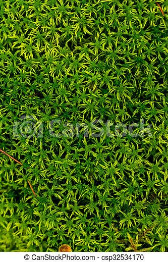 Musgo verde en el bosque - csp32534170