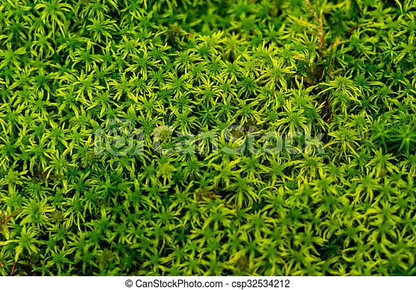 Musgo verde en el bosque - csp32534212