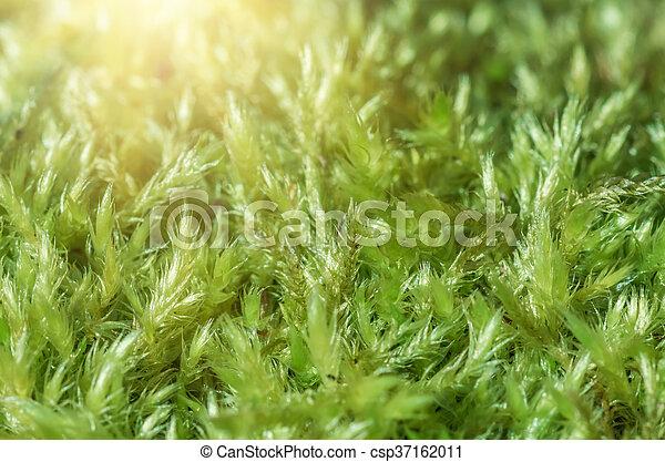 Musgo verde en el bosque - csp37162011
