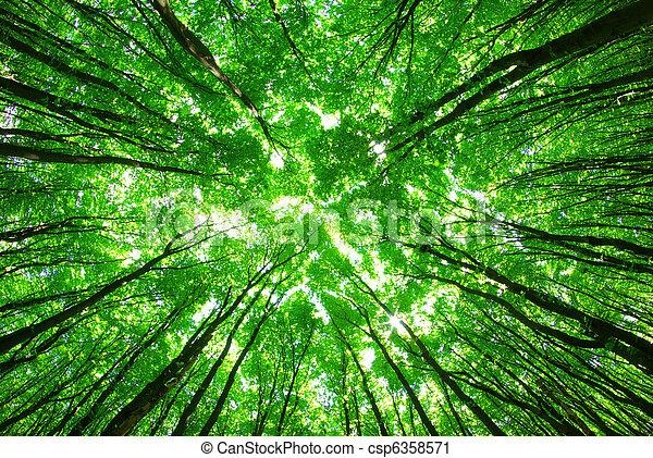 bosque verde - csp6358571
