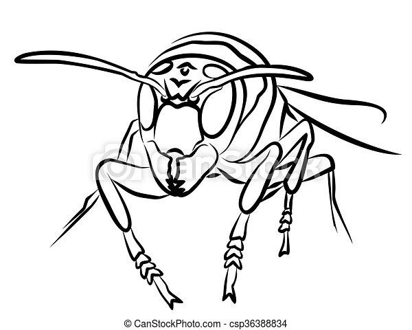 Escarabajo de abeja. - csp36388834
