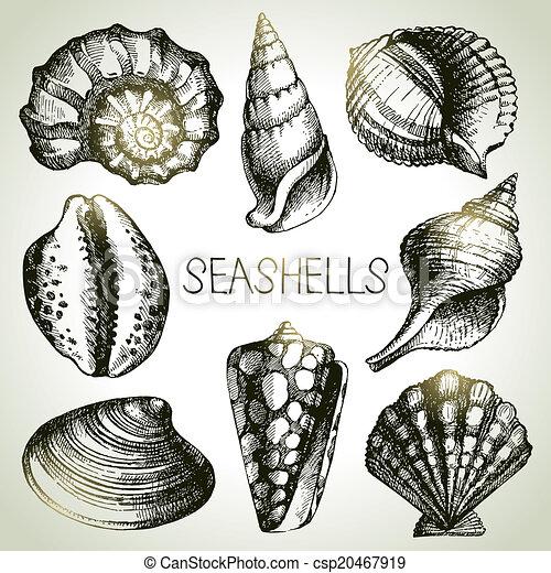 Conchas de mar dibujadas a mano. Elementos de diseño Sketch - csp20467919