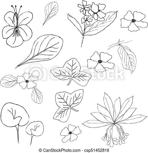 La colección de flores y plantas dibujadas a mano. ilustraciones ...