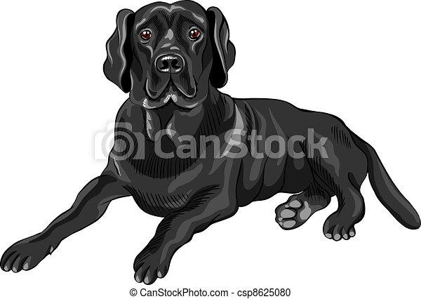 El perro dibujante del vector cría labradores negros - csp8625080