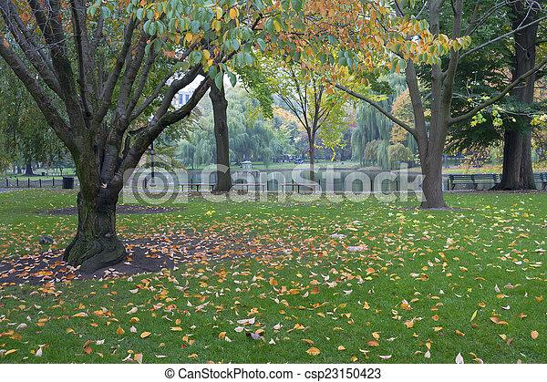 Boston Common Public Garden - csp23150423