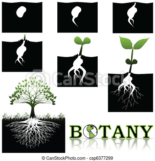 botânica - csp6377299