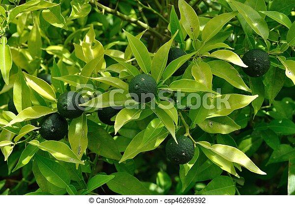 Botanical orangery - csp46269392