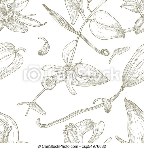 Botanical seamless pattern with vanilla, leaves, flowers, fruits or pods hand drawn with contour lines on white background. Natural vector illustration in antique style for fabric print, wallpaper. - csp54976832