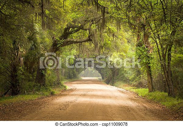 Botanik, mossa, smuts, ö, ek, väg, träd, vik, plantering ...